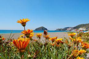 Ischia im Frühling